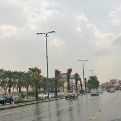 أمن الطرق يضبط عدد من المواطنين والمقيمين و 181 شاحنة بحمولاتها من الحطب